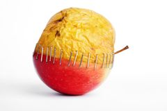 Fresh red and old yellow apple halves with staples on white background,. Plastic surgery metaphor stock photos