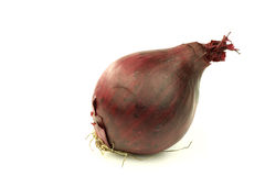 Fresh red onion Royalty Free Stock Image