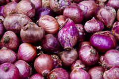 Free Fresh Red Onions Stock Photos - 45382573