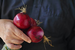 Fresh red onions held by man Royalty Free Stock Photos