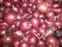 fresh red onions of the new crop royalty free stock photos