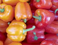 Red and orange colorful peppers Royalty Free Stock Images