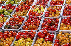 Fresh Red Orange Yellow Green Grape Tomatoes Royalty Free Stock Photography