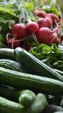 Fresh red  organic radish and cucumber. Pic of Fresh red  organic radish and cucumber Stock Photography