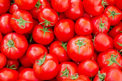 Fresh red organic tomatoes Stock Photography
