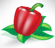 Fresh red paprika Royalty Free Stock Photos