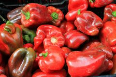 Fresh red peppers for sale in a Pacific Northwest farmers market Stock Photo