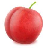 Fresh red plum  Stock Photography