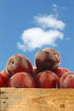 Fresh red plums in a wooden crate Stock Photos