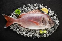 Fresh red porgy fish on ice on a black stone table. Top view Stock Photos