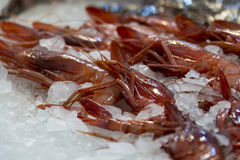 Fresh red prawn Stock Images