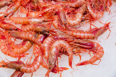 Fresh red prawns Royalty Free Stock Photo