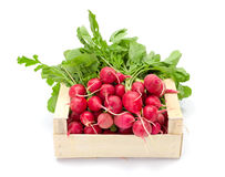 Fresh red radish in crate Royalty Free Stock Photos