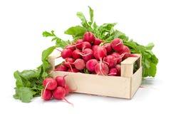 Fresh red radish in crate Stock Photo