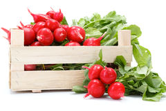 Fresh red radish in crate Royalty Free Stock Image
