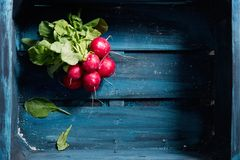 Fresh red radish in wooden crate. Fresh red radish in dark blue wooden crate, close up Royalty Free Stock Images