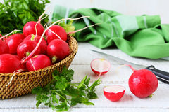 Fresh red radish and greens Royalty Free Stock Image