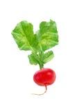 Fresh red radish isolated Stock Photos