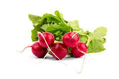 Fresh red radish isolated on white background Royalty Free Stock Photos