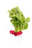 Fresh red radish isolated Royalty Free Stock Images