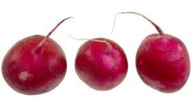 Fresh Red Radish Stock Image