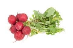 Fresh red radish isolated on white Royalty Free Stock Photography