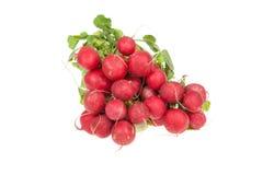 Fresh red radish isolated on white Royalty Free Stock Image