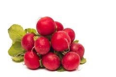 Fresh red radish isolated Royalty Free Stock Photography