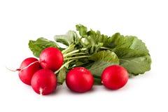 Fresh red radish Royalty Free Stock Image