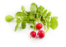 Fresh red radish isolated on white background. Radish. Fresh red radish isolated on white background Stock Image