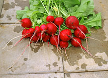 Fresh red radish with leaves. After harvest Stock Photos