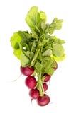 Fresh Red Radish Royalty Free Stock Images