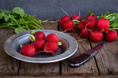 Fresh red radish for salad on wooden background. Healty food. Royalty Free Stock Photo