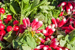 Fresh red radish. For sale on a market Royalty Free Stock Photos