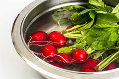 Fresh red radish in water in metal bowl Stock Photography