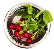 Fresh red radish in water in metal bowl Stock Photo