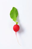 Fresh red radish. On white background Stock Images