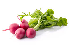 Fresh red radish  on white. Background Stock Photography
