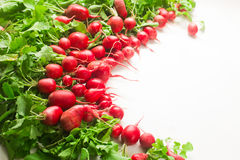 Fresh red radish on white background. Fresh red radish from garden on white background Stock Image
