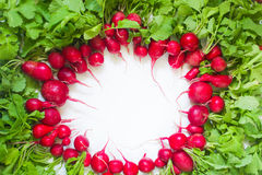 Fresh red radish on white background. Fresh red radish from garden on white background Stock Photography