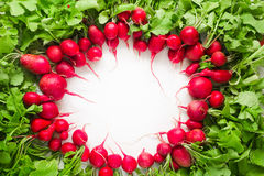 Fresh red radish on white background. Fresh red radish from garden on white background Royalty Free Stock Images