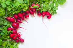 Fresh red radish on white background. Fresh red radish from garden on white background Royalty Free Stock Photo