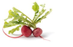 Fresh red radish on white. Fresh red radish isolated on white Stock Images