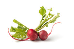 Fresh red radish on white. Fresh red radish isolated on white Royalty Free Stock Photos
