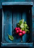 Fresh red radish in wooden crate. Fresh red radish in dark blue wooden crate, close up Royalty Free Stock Photography