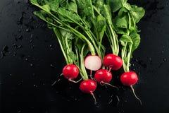 Fresh red radishes Royalty Free Stock Photo