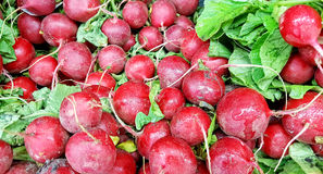 Fresh Red Radishes Royalty Free Stock Images