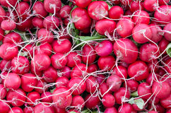 Fresh red radishes on display at the market. Freshly harvested red radishes on display at the farmers market Royalty Free Stock Images