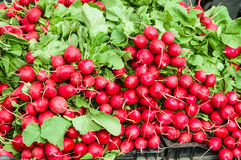 Fresh red radishes displayed at a market Royalty Free Stock Photography