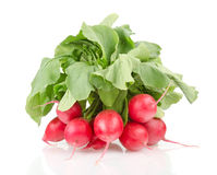 Fresh Red Radishes with Green Leaves. A Bunch of Fresh Radishes Isolated on White Background Royalty Free Stock Photos
